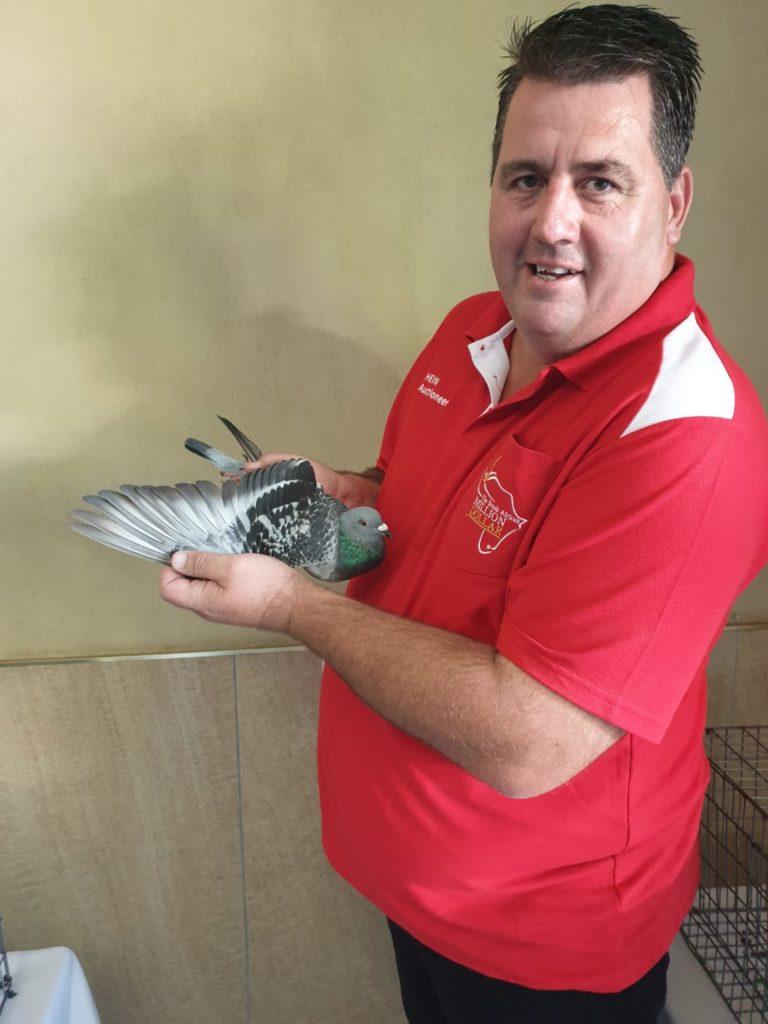 Samdpr Auction 2020 New South Africa Auction Record By Top Pigeon Auctioneer Hein Beneke Samdpr.com is tracked by us since march, 2016. top pigeon auctioneer hein beneke